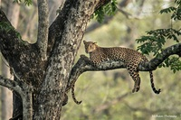 Thử tài tinh mắt: Tìm con vật đang lẩn trốn trong bức hình