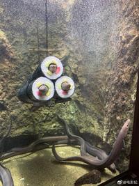 Nuôi lươn trong bể kính, chủ nhà thiết kế vật trang trí hình đồ ăn khiến dân mạng hãi hùng, ám ảnh không dám ăn