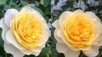 TPHCM: Sân 30m2 ngát hương hoa hồng cho cả nhà thư giãn giữa mùa dịch