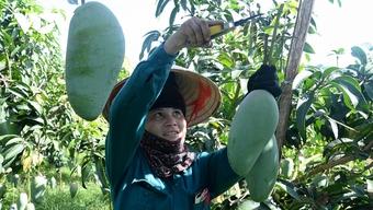 Mở cánh cửa cho nông sản Việt vào EU và Anh