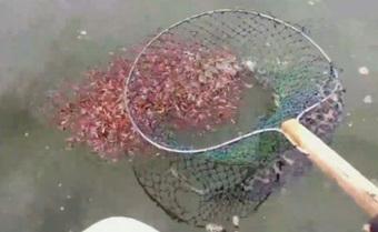Vớt được con cá lớn nhưng thấy mặt nước đỏ cả một vùng, chàng trai giật mình vội vã thả ngay chiến lợi phẩm