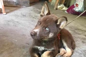 """Chàng trai mua chú chó con về nuôi, người thân vừa nhìn thấy đã khuyên """"tống cổ"""" ngay lập tức"""