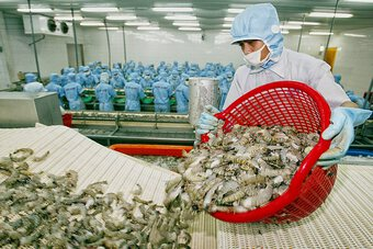 Doanh nghiệp thủy sản mong mỏi tiêm vắc xin Covid-19 cho người lao động