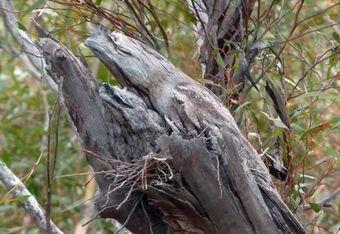 Thấy trên thân cây có thứ gì đó bám vào, lại gần quan sát, người đàn ông giật thót mình vì cảnh tượng trước mắt