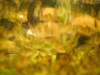 Vương Nguyên ''khốn khổ'' vì không có nguồn cảm xúc sáng tác