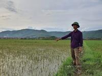"""Thanh Hóa: Lấp cống để thi công cao tốc Bắc - Nam khiến 13 ha lúa của nông dân """"bị chết đuối"""""""