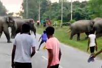 Kinh hoàng cảnh người đàn ông bị voi giẫm đạp đến chết