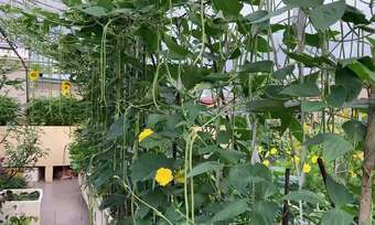 Người phụ nữ Hà Nội ''trồng rừng'' trên sân thượng