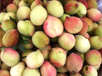 """Cây đào """"đột biến"""" cho hàng trăm quả mọc kín từ thân lên đến cành, dân mạng trầm trồ: Ở Việt Nam thì không còn một trái!"""