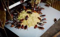 Hốt tiền từ loài ăn bẩn, ở bẩn tại Việt Nam