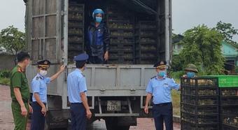 Quảng Ninh: Phát hiện 52.000 con gia cầm giống không rõ nguồn gốc