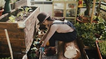 Mẹ Việt khéo tay biến ban công 8m2 thành vườn hoa trái tươi tốt ở trời Âu