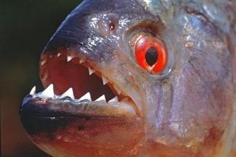 Trăn Anaconda và những thủy quái chết người trên sông Amazon