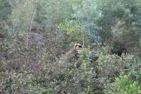 """Thanh Hóa: Cả làng thi nhau lên núi hái """"lộc rừng"""""""