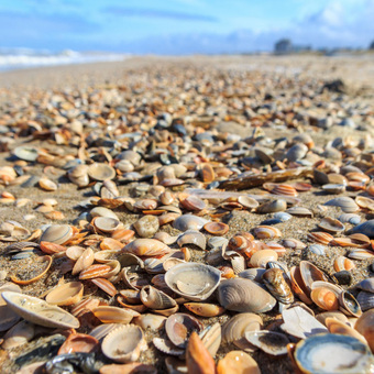 Hàng chục nghìn sinh vật biển bị luộc chín dưới nắng nóng kỷ lục tại Canada
