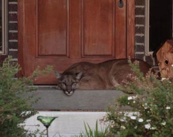Cửa nhà tự nhiên bị chặn không thể mở được, cố nhòm ra ngoài xem có chuyện gì, người đàn ông hoảng sợ vội vã cầu cứu cảnh sát