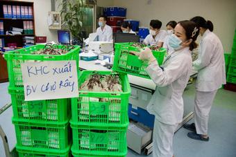 Hà Nội chi viện gấp 1.000 đơn vị máu cho Bệnh viện Chợ Rẫy TP HCM