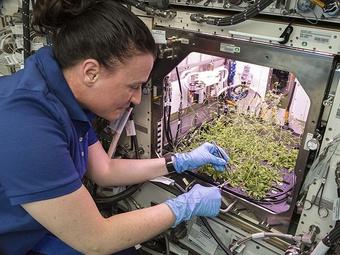 NASA trồng ớt trên trạm không gian quốc tế