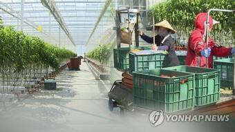 Lao động Việt Nam được gia hạn lưu trú thêm 1 năm tại Hàn Quốc