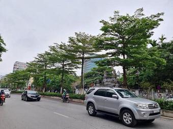 Bắt Tổng Giám đốc Cty Cây xanh Hà Nội vì ''thổi giá'' cây, gây thiệt hại 30 tỷ đồng