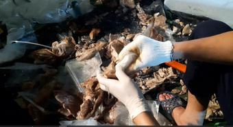 Cảnh sát đột kích phá chuyên án hơn 500kg ma túy giấu trong dạ dày lợn, mô tơ điện