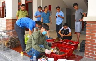"""7 cá thể hổ Đông Dương được chuyển về """"nhà mới"""""""