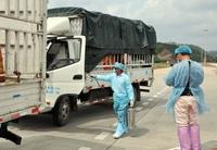 Vì sao Trung Quốc tạm dừng nhập thanh long trong 7 ngày?