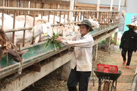 Đắk Lắk: Bỏ phố lương cao về quê vợ nuôi con tai dài lấy sữa, kỹ sư ĐH Bách khoa thu gần 1 tỷ/năm