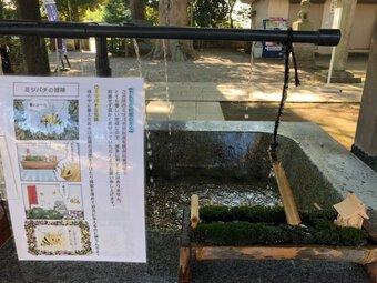 Đền thờ kỳ lạ ở Nhật Bản xây chỗ uống nước dành riêng cho những chú ong