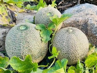 Mẹ Việt tự cuốc đất trồng rau, làm vườn hữu cơ tại Hàn Quốc