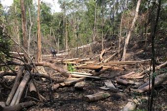 Để mất rừng, 2 nhân viên bảo vệ bị khởi tố