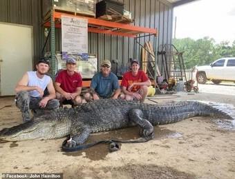 """Phát hiện cổ vật ngàn năm trong bụng cá sấu """"quái vật"""""""