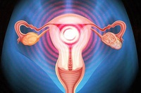 """5 nhóm thực phẩm này tử cung """"rất thích"""" và đây là 10 điều nên làm để giúp tử cung luôn khỏe mạnh"""