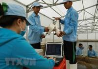 Kiến nghị gỡ khó cho cá tra quá lứa ở Đồng bằng sông Cửu Long