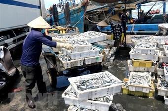 Quảng Ngãi hỗ trợ người dân tiêu thụ gần 300 tấn hải sản tồn đọng