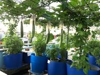 """Bất ngờ với vườn rau trái """"đỉnh cao"""" trên nóc nhà tại Đồng Nai"""