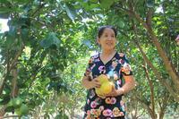 Tăng tốc đàm phán để sớm xuất khẩu chính ngạch sầu riêng, tổ yến, khoai lang sang Trung Quốc