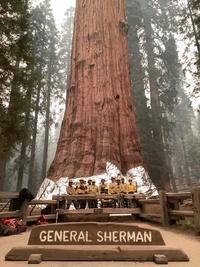 Giải cứu rừng cây khổng lồ trước đám cháy