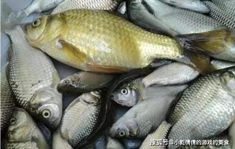 4 loại cá bà nội trợ đảm đang chỉ cần nhìn qua cũng không mua