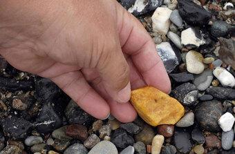 Những bí ẩn về long diên hương, giá hơn 7 tỷ đồng/kg
