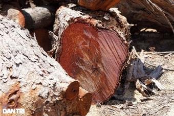 """Doanh nghiệp """"nhầm lẫn"""" phá hơn 5 ha rừng: Đề xuất phạt 60-150 triệu đồng"""