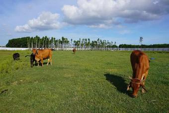 """Dự án 670 tỉ đồng """"đắp chiếu"""", thành bãi chăn bò"""