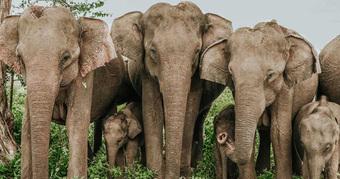 Có thể bạn chưa biết: Loài voi cũng có thể sử dụng ngôn ngữ ký hiệu và ''''bất tử'''' trước ung thư