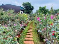 9X Đắk Lắk đánh liều bán ô tô, vay tiền thuê đất, làm vườn hồng 10.000 gốc