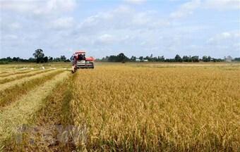 Ngành lúa gạo chưa gỡ được ''nút thắt tín dụng'' như kỳ vọng