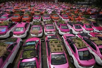 Kỳ lạ hình ảnh rau xanh phủ đầy nóc xe taxi ở Thái Lan