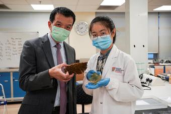 Singapore biến vỏ sầu riêng thành băng keo cá nhân kháng khuẩn