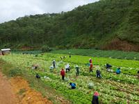 Lâm Đồng đã tặng hơn 6.000 tấn nông sản cho miền Nam