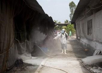 Xuất hiện các ổ dịch tả lợn châu Phi ở tỉnh Kiên Giang