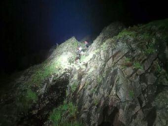 Gấu xám chết vì bị dê núi húc thủng cổ